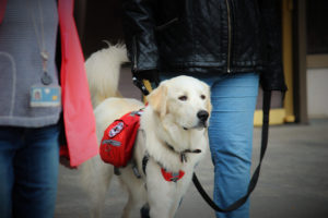 Service dogs help veterans with PTSD